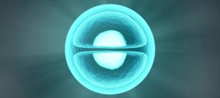 Cellule programmate per organizzarsi in strutture complesse